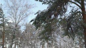 Boomtakken in de winter stock videobeelden