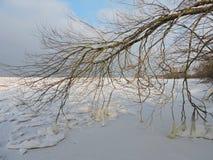 Boomtakken in de winter, Litouwen Royalty-vrije Stock Afbeeldingen