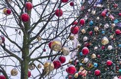 Boomtakken die met gouden en rode ballen op de achtergrond van een grote Kerstboom worden verfraaid royalty-vrije stock foto