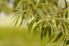 Boomtakken die omhoog met groene bladeren en blauwe hemel kijken Royalty-vrije Stock Foto