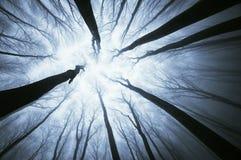 Boomtakken die omhoog voor de hemel in een mistig bos bereiken Stock Foto's