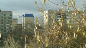 Boomtakken door de zon op sity achtergrond worden verlicht die De slingeringen van de de herfstboom in de wind stock footage
