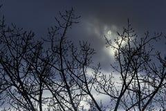 Boomtakken in een volle maannacht Stock Foto