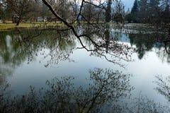Boomtakken in het water worden weerspiegeld dat Royalty-vrije Stock Fotografie