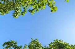 Boomtakken met bladeren tegen blauwe hemel Royalty-vrije Stock Foto's