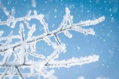 Boomtakken met ijskristallen tegen een blauwe hemel en een dalende sneeuw worden behandeld die stock foto's