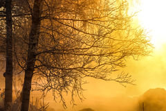 Boomtakken in mooi zonlicht royalty-vrije stock foto's