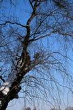 Boomtakken op een blauwe hemel tijdens de winter royalty-vrije stock foto's