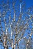 Boomtakken op een blauwe hemel tijdens de winter royalty-vrije stock foto
