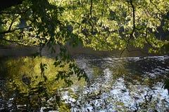 Boomtakken over het water op een mooie de Herfstdag die worden gebogen royalty-vrije stock foto's