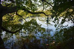 Boomtakken over het water op een mooie de Herfstdag die worden gebogen stock fotografie