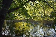 Boomtakken over het water op een mooie de Herfstdag die worden gebogen royalty-vrije stock foto
