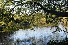 Boomtakken over het water op een mooie de Herfstdag die worden gebogen stock afbeelding