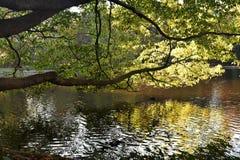 Boomtakken over het water op een mooie de Herfstdag die worden gebogen royalty-vrije stock afbeelding