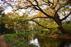 Boomtakken over het water op een mooie de Herfstdag die worden gebogen royalty-vrije stock afbeeldingen