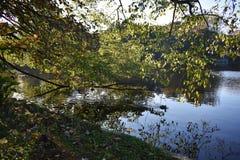 Boomtakken over het water op een mooie de Herfstdag die worden gebogen stock foto
