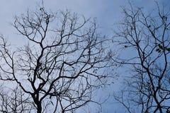 Boomtakken tegen de hemel Fee somber bos stock foto's