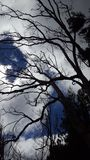 Boomtakken zonder Bladeren royalty-vrije stock fotografie