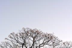 Boomtakken zonder bladeren tegen de hemel stock foto's