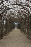 Boomtunnel in Schonbrunn-Tuin in Wenen Stock Fotografie