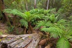 Boomvarens die die dichtbij kreek groeien door bos wordt omringd wordt behandeld met Royalty-vrije Stock Afbeeldingen