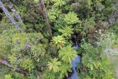 Boomvarens die in het regenwoud van Nieuw Zeeland groeien Royalty-vrije Stock Afbeeldingen