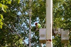 Boomverwijdering die een boomemmer met behulp van Royalty-vrije Stock Foto