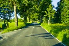 Boomweg van een landweg in Hesse, Duitsland stock afbeelding