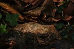 Boomwortel met uniek patroon stock foto's