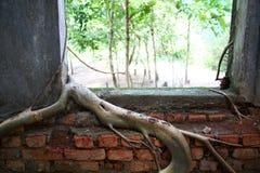 Boomwortel op de oude tempelmuur Stock Fotografie