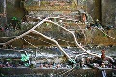 Boomwortel op de oude tempelmuur Royalty-vrije Stock Afbeelding