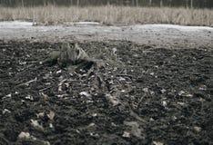 Boomwortel op een modderige bodem van meer royalty-vrije stock afbeelding