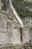 Boomwortel op muur van de tempel van Preah Khan in Angkor Royalty-vrije Stock Afbeelding