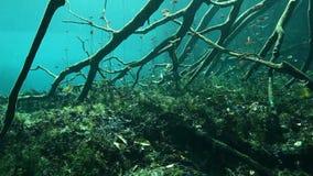 Boomwortels en rotsen in Yucatan Mexico cenote stock footage