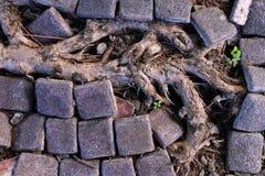 Boomwortels op vloer Stock Afbeeldingen