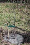 Boomzaailing in grond wordt geplant die Royalty-vrije Stock Afbeelding