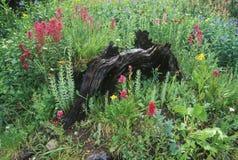 Boone霍尔种植园,查尔斯顿,南卡罗来纳地面  免版税库存图片