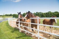 Boonville, MO - 2017年5月30日:一个小组母马和年轻Clydes 免版税库存图片