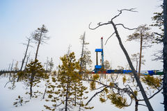 Booreiland in het moeras op de winter royalty-vrije stock fotografie