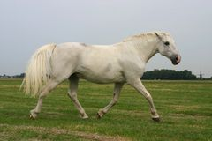 Boos dravend paard Royalty-vrije Stock Foto