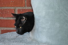Boost on our balcony. Black cat inside the plush part of a scratch furniture out on a balcony with red bricks in the background royalty free stock photography
