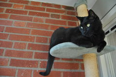 Boost on our balcony. Black cat lays on the plush part of a scratch furniture out on a balcony with red bricks in the background stock photos