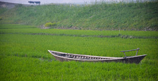 Boot auf grünem Feld Stockfoto