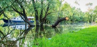 Boot, bomen, zon Stock Foto's