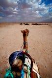 Boot der Wüste Stockfotos