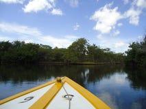 Boot die bij een mangrove onder ogen zien royalty-vrije stock afbeelding