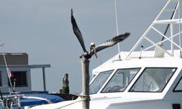 Boot en pelikaan stock afbeeldingen