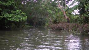 Boot fährt gegen Wald u. Kanal in Pirojpur, Bangladesch stock footage