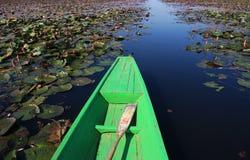Boot im Lotosteich lizenzfreie stockbilder