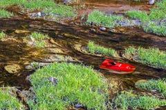 Boot op het water Stock Fotografie